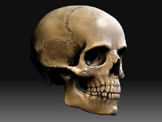 Skeleton Of The Head Notes Photography Gallery Sites With Skeleton ...