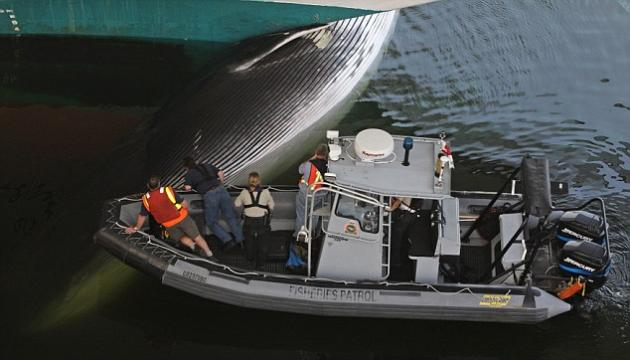 Whale Killed By Smmoth Sectived  FOOYOH ENTERTAINMENT