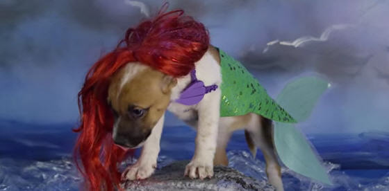 Puppies Dressed As Disney Characters Are The Cutest Fooyoh