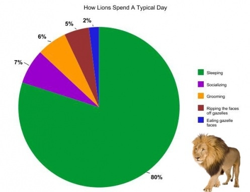 A Day In The Life Of An Animal    With Pie Charts! :: FOOYOH