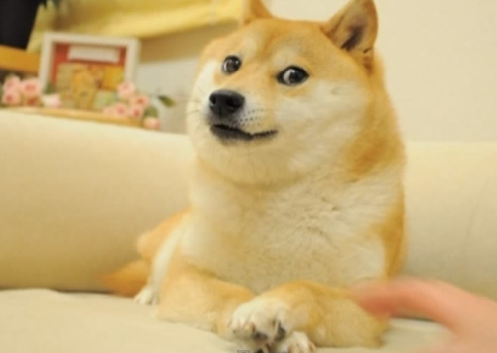 The Real Story Behind the Doge Meme Might Have Originated ...