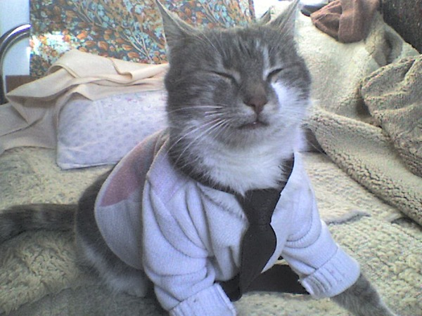 These 26 Cats Should Be Quot Menswear Dog S Quot Equals Fooyoh